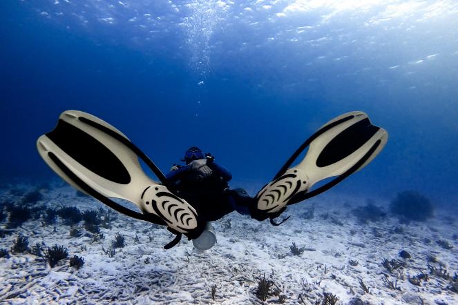 Dive watch scuba diver