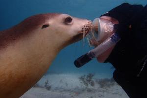 sea lion marine animal